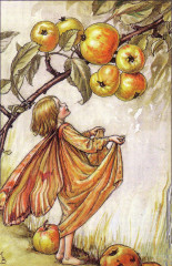 apples and fairy